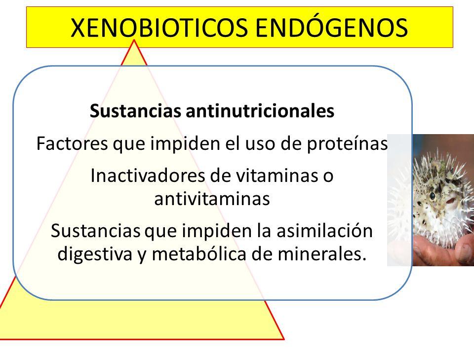 XENOBIOTICOS ENDÓGENOS Sustancias antinutricionales Factores que impiden el uso de proteínas Inactivadores de vitaminas o antivitaminas Sustancias que