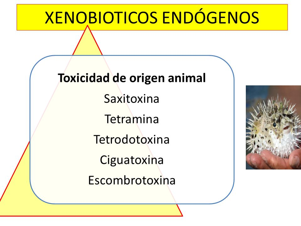 XENOBIOTICOS ENDÓGENOS Toxicidad de origen animal Saxitoxina Tetramina Tetrodotoxina Ciguatoxina Escombrotoxina