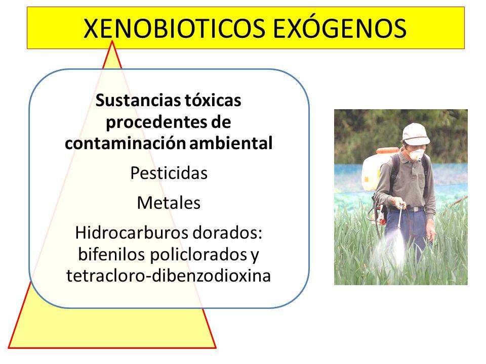 XENOBIOTICOS EXÓGENOS Sustancias tóxicas procedentes de contaminación ambiental Pesticidas Metales Hidrocarburos dorados: bifenilos policlorados y tet