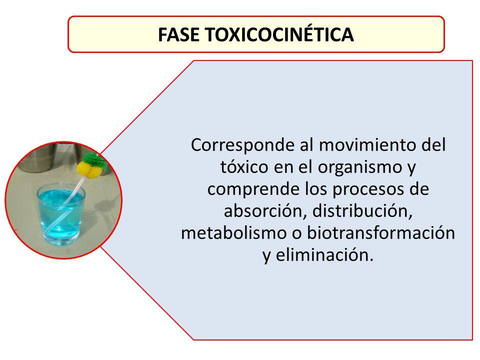 Corresponde al movimiento del tóxico en el organismo y comprende los procesos de absorción, distribución, metabolismo o biotransformación y eliminació