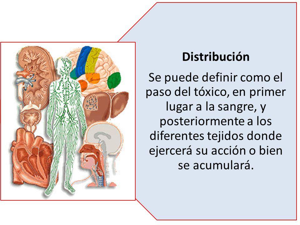 Distribución Se puede definir como el paso del tóxico, en primer lugar a la sangre, y posteriormente a los diferentes tejidos donde ejercerá su acción