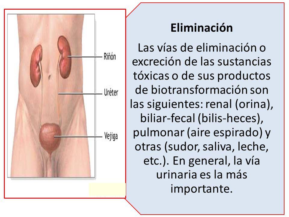 Eliminación Las vías de eliminación o excreción de las sustancias tóxicas o de sus productos de biotransformación son las siguientes: renal (orina), b