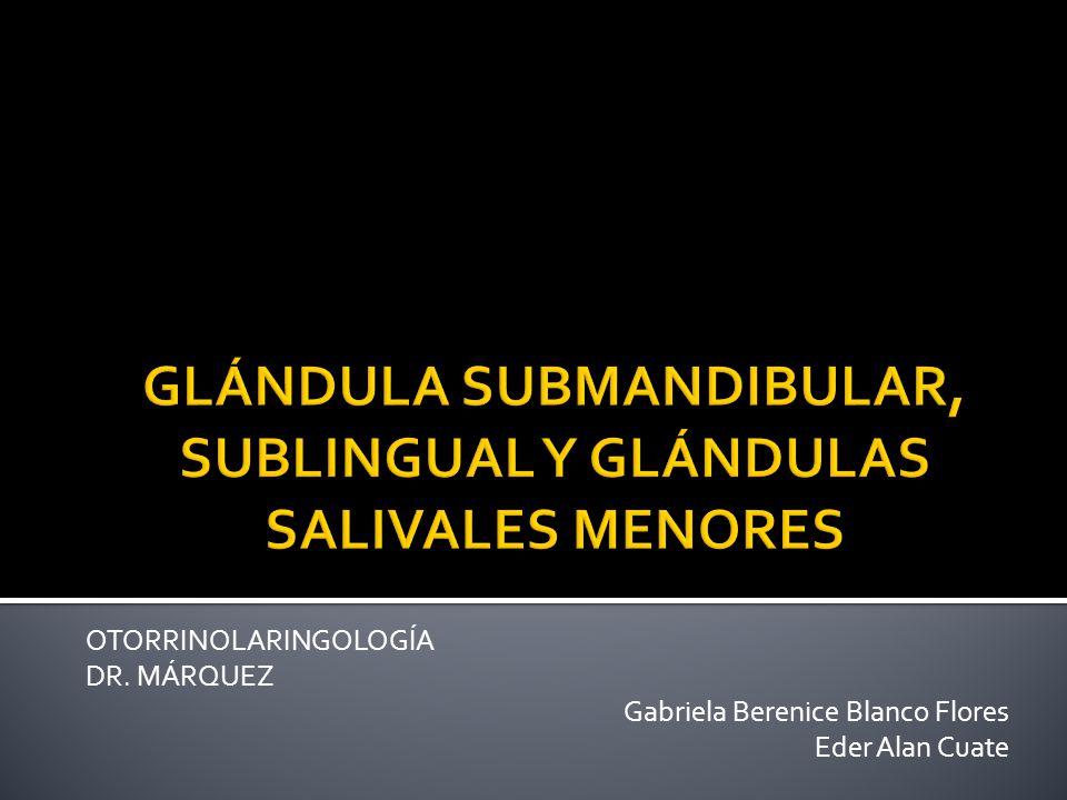 OTORRINOLARINGOLOGÍA DR. MÁRQUEZ Gabriela Berenice Blanco Flores Eder Alan Cuate