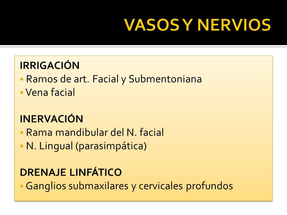 IRRIGACIÓN Ramos de art. Facial y Submentoniana Vena facial INERVACIÓN Rama mandibular del N. facial N. Lingual (parasimpática) DRENAJE LINFÁTICO Gang