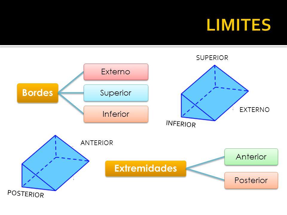 Bordes ExternoSuperiorInferior EXTERNO INFERIOR SUPERIOR Extremidades AnteriorPosterior POSTERIOR ANTERIOR
