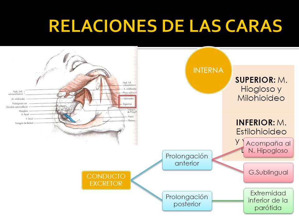 SUPERIOR: M. Hiogloso y Milohioideo INFERIOR: M. Estilohioideo y vientre ant. Digástrico INTERNA CONDUCTO EXCRETOR Prolongación anterior Acompaña al N