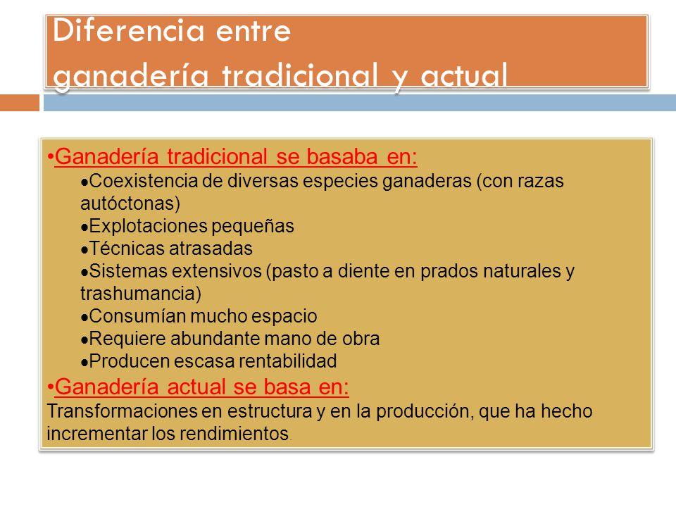 Diferencia entre ganadería tradicional y actual Ganadería tradicional se basaba en: Coexistencia de diversas especies ganaderas (con razas autóctonas)