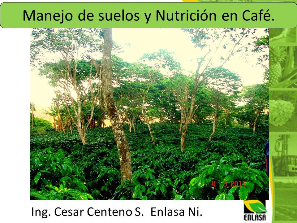 Manejo de suelos y Nutrición en Café. Ing. Cesar Centeno S. Enlasa Ni.