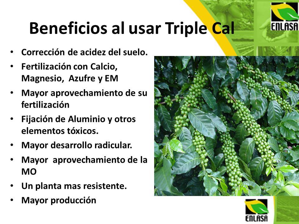 Beneficios al usar Triple Cal Corrección de acidez del suelo. Fertilización con Calcio, Magnesio, Azufre y EM Mayor aprovechamiento de su fertilizació