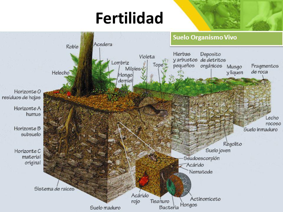 Fertilidad Suelo Organismo Vivo