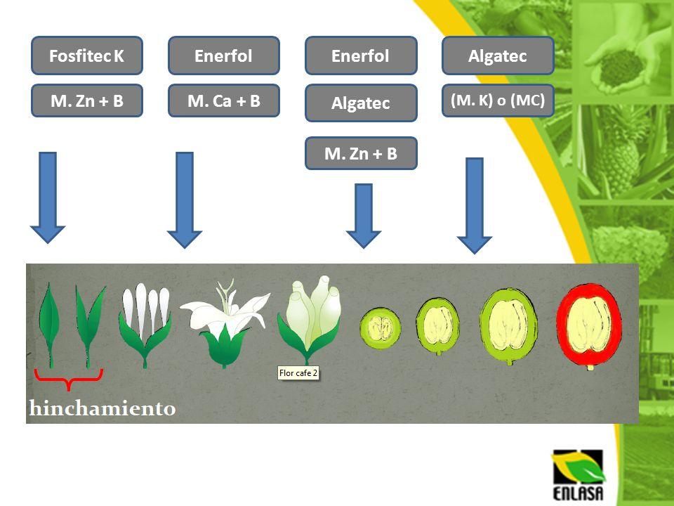 Fosfitec K M. Zn + B Algatec M. Ca + B Enerfol M. Zn + B (M. K) o (MC) AlgatecEnerfol