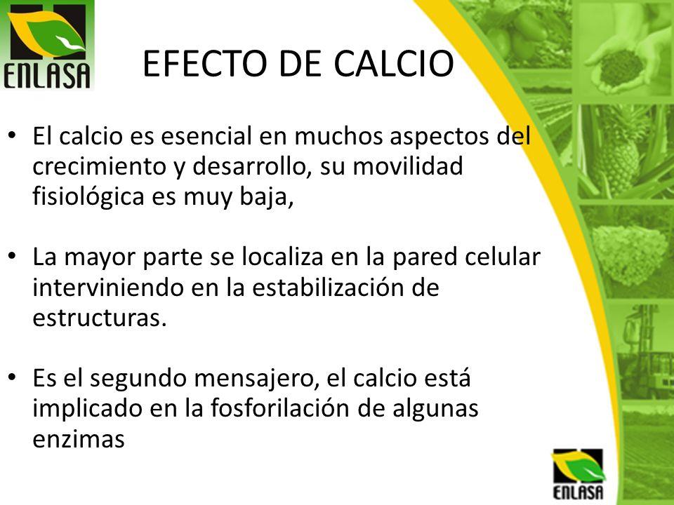 EFECTO DE CALCIO El calcio es esencial en muchos aspectos del crecimiento y desarrollo, su movilidad fisiológica es muy baja, La mayor parte se locali