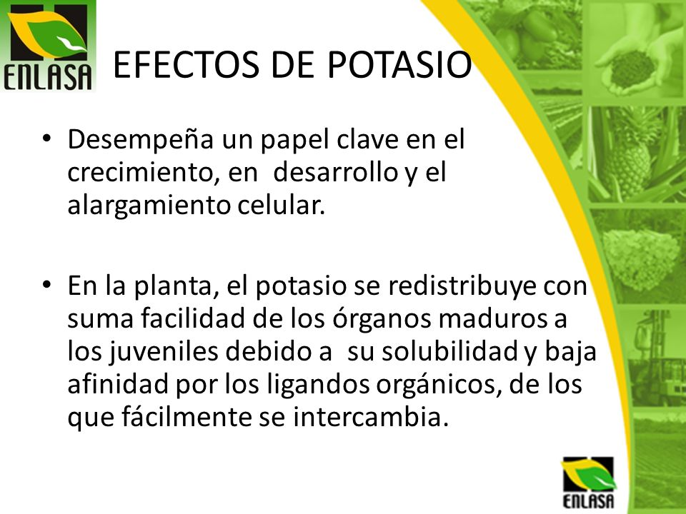 EFECTOS DE POTASIO Desempeña un papel clave en el crecimiento, en desarrollo y el alargamiento celular. En la planta, el potasio se redistribuye con s