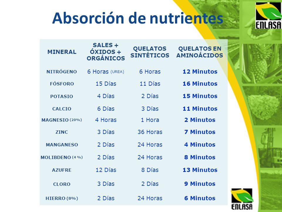Absorción de nutrientes MINERAL SALES + ÓXIDOS + ORGÁNICOS QUELATOS SINTÉTICOS QUELATOS EN AMINOÁCIDOS NITRÓGENO 6 Horas (UREA) 6 Horas12 Minutos FÓSF