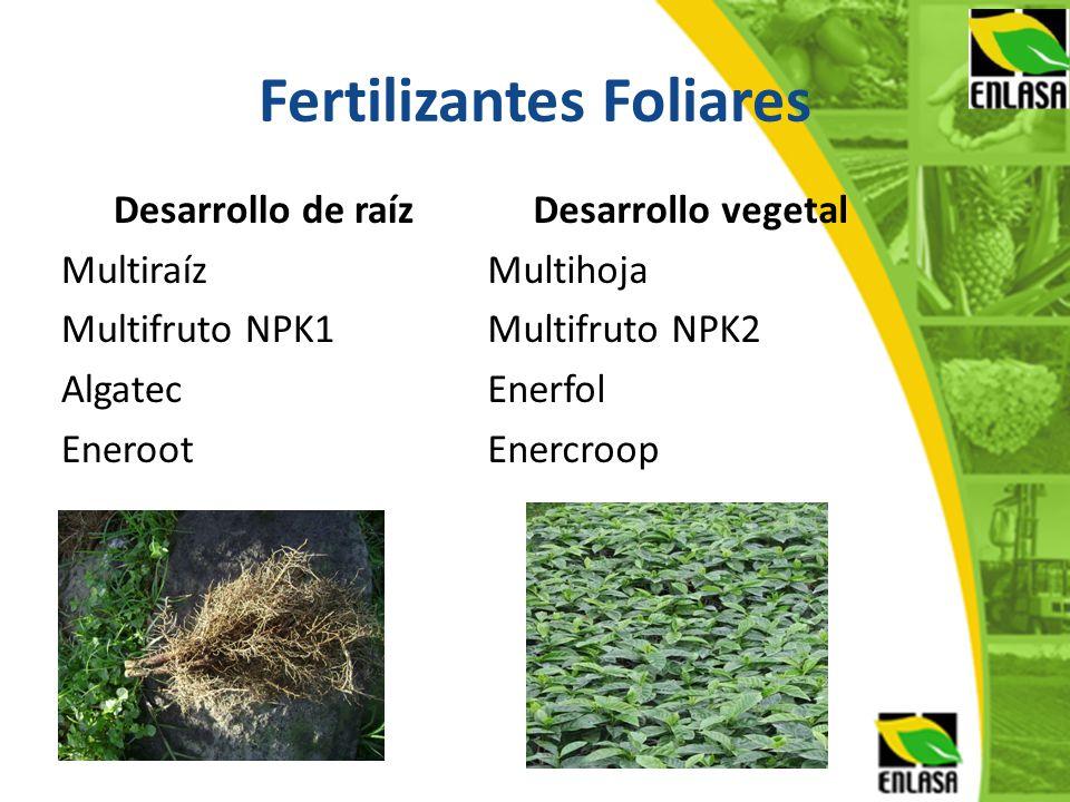 Fertilizantes Foliares Desarrollo de raíz Multiraíz Multifruto NPK1 Algatec Eneroot Desarrollo vegetal Multihoja Multifruto NPK2 Enerfol Enercroop