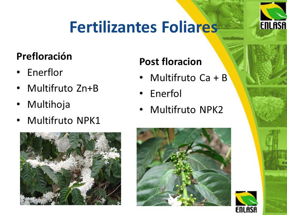 Fertilizantes Foliares Prefloración Enerflor Multifruto Zn+B Multihoja Multifruto NPK1 Post floracion Multifruto Ca + B Enerfol Multifruto NPK2
