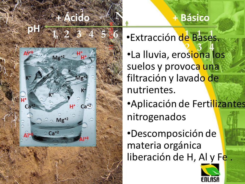 Ca +2 Mg +2 K+K+ H+H+ Al +3 H+H+ H+H+ Mg +2 K+K+ K+K+ Ca +2 H+H+ NEURO + Básico pH 12345678910101 1212 1313 1414 + Ácido Extracción de Bases. La lluvi