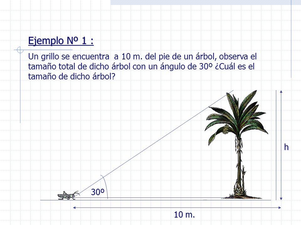 Ejemplo Nº 1 : Un grillo se encuentra a 10 m. del pie de un árbol, observa el tamaño total de dicho árbol con un ángulo de 30º ¿Cuál es el tamaño de d