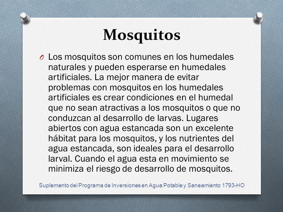 Mosquitos O Los mosquitos son comunes en los humedales naturales y pueden esperarse en humedales artificiales.