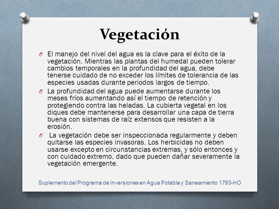 Vegetación O El manejo del nivel del agua es la clave para el éxito de la vegetación.