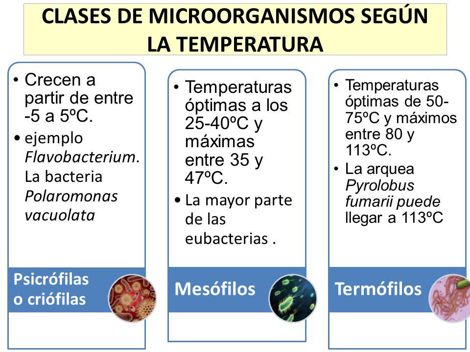 CLASES DE MICROORGANISMOS SEGÚN LA TEMPERATURA Crecen a partir de entre -5 a 5ºC. ejemplo Flavobacterium. La bacteria Polaromonas vacuolata Psicrófila