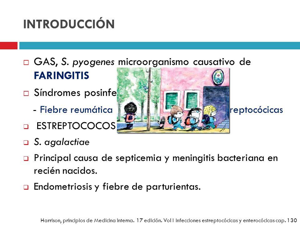 INTRODUCCIÓN GAS, S. pyogenes microorganismo causativo de FARINGITIS Síndromes posinfecciosos - Fiebre reumática - Glomerulonefritis posestreptocócica