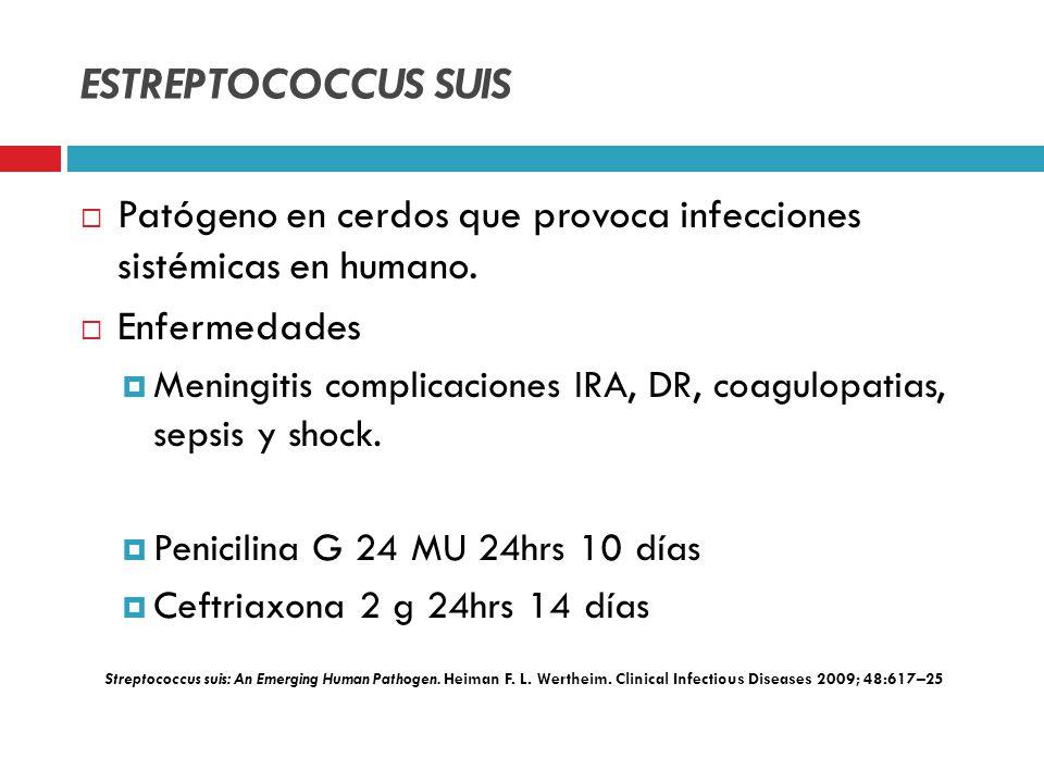 ESTREPTOCOCCUS SUIS Patógeno en cerdos que provoca infecciones sistémicas en humano. Enfermedades Meningitis complicaciones IRA, DR, coagulopatias, se