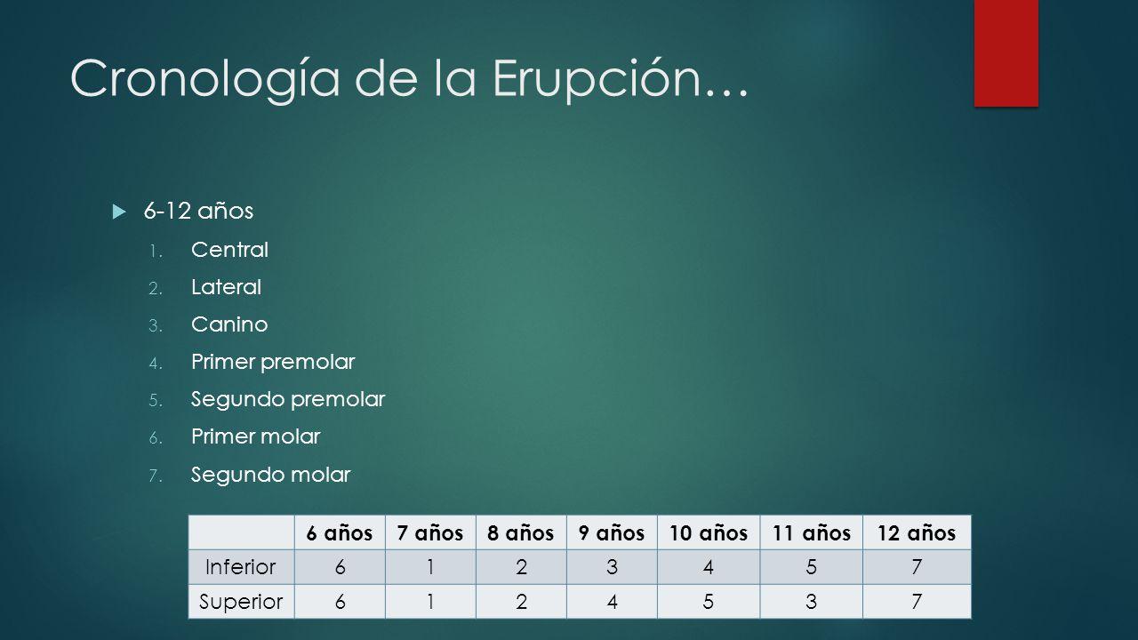 Cronología de la Erupción… 6-12 años 1. Central 2. Lateral 3. Canino 4. Primer premolar 5. Segundo premolar 6. Primer molar 7. Segundo molar 6 años7 a
