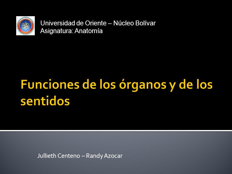 Jullieth Centeno – Randy Azocar Universidad de Oriente – Núcleo Bolívar Asignatura: Anatomía