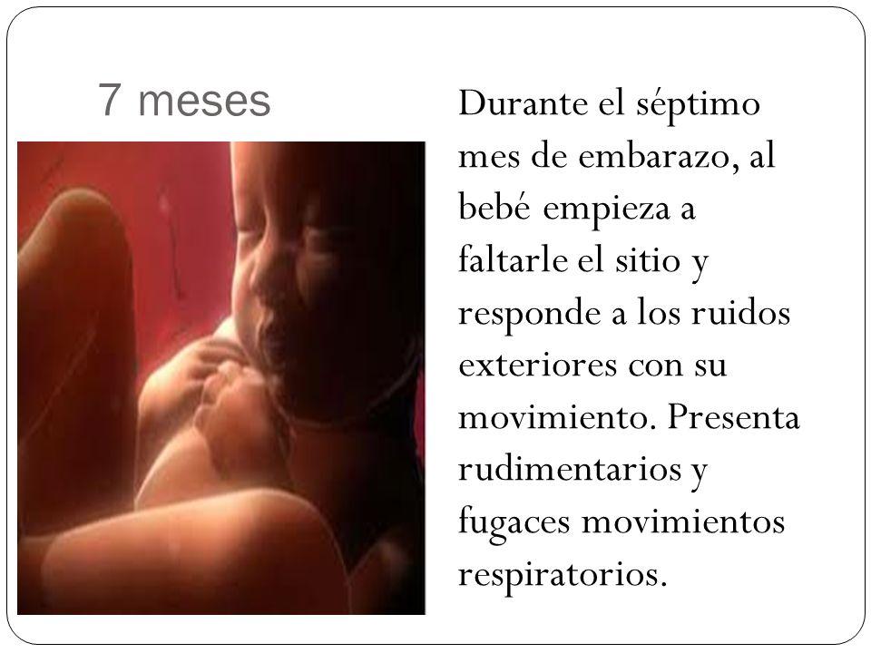 7 meses Durante el séptimo mes de embarazo, al bebé empieza a faltarle el sitio y responde a los ruidos exteriores con su movimiento. Presenta rudimen