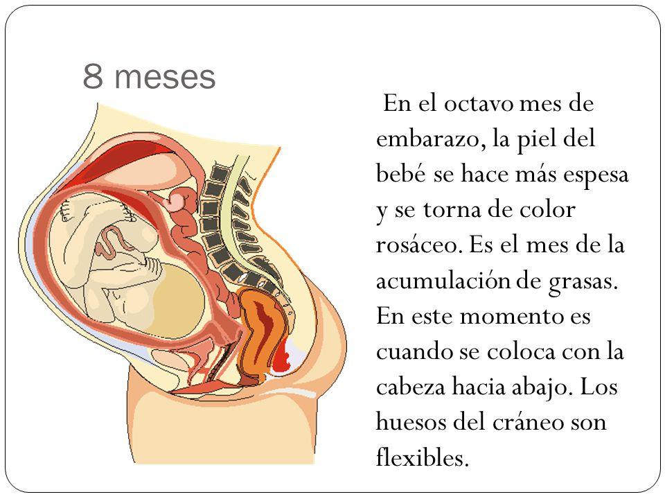 8 meses En el octavo mes de embarazo, la piel del bebé se hace más espesa y se torna de color rosáceo. Es el mes de la acumulación de grasas. En este