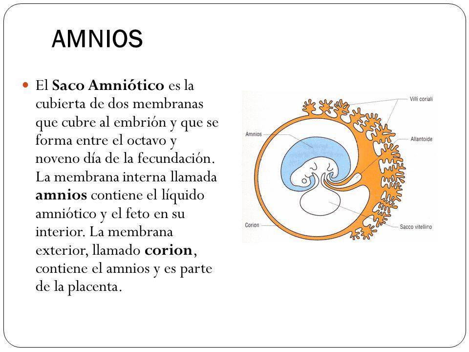 AMNIOS El Saco Amniótico es la cubierta de dos membranas que cubre al embrión y que se forma entre el octavo y noveno día de la fecundación. La membra