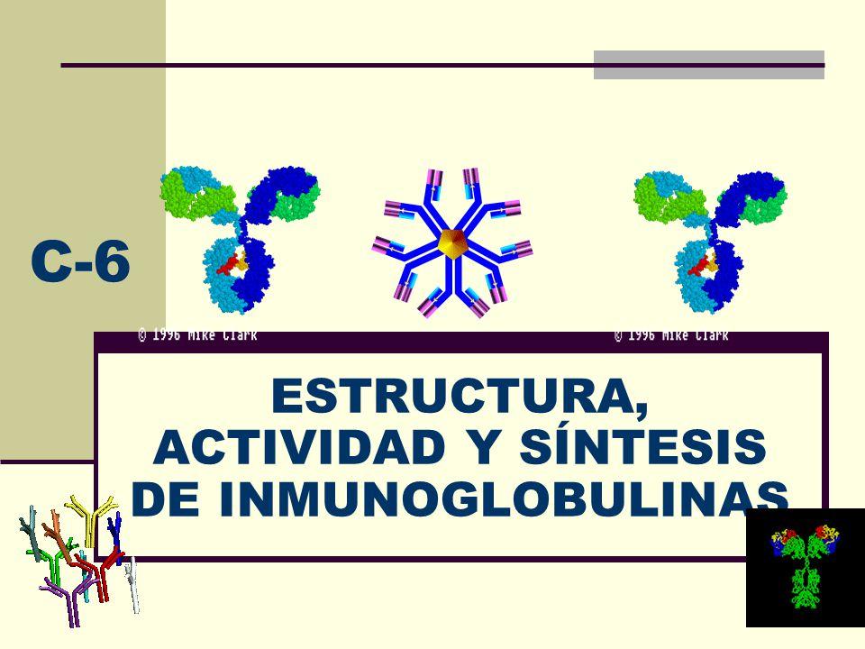 ESTRUCTURA, ACTIVIDAD Y SÍNTESIS DE INMUNOGLOBULINAS C-6