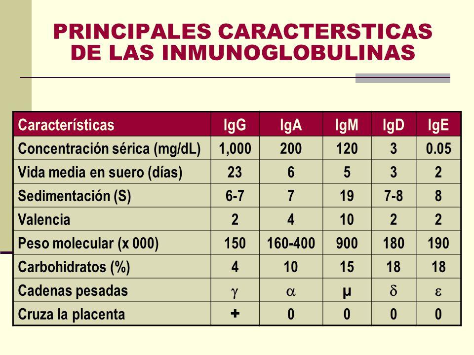 PRINCIPALES CARACTERSTICAS DE LAS INMUNOGLOBULINAS CaracterísticasIgGIgAIgMIgDIgE Concentración sérica (mg/dL)1,00020012030.05 Vida media en suero (dí