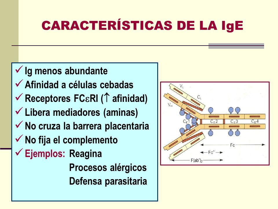 CARACTERÍSTICAS DE LA IgE Ig menos abundante Afinidad a células cebadas Receptores FC RI ( afinidad) Libera mediadores (aminas) No cruza la barrera pl