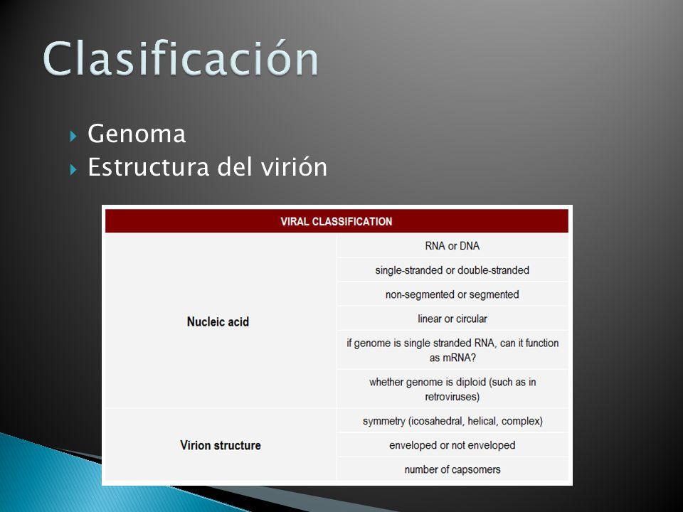 Genoma Estructura del virión