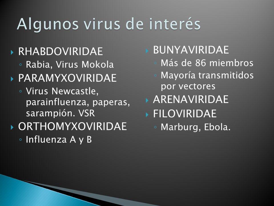 RHABDOVIRIDAE Rabia, Virus Mokola PARAMYXOVIRIDAE Virus Newcastle, parainfluenza, paperas, sarampión. VSR ORTHOMYXOVIRIDAE Influenza A y B BUNYAVIRIDA