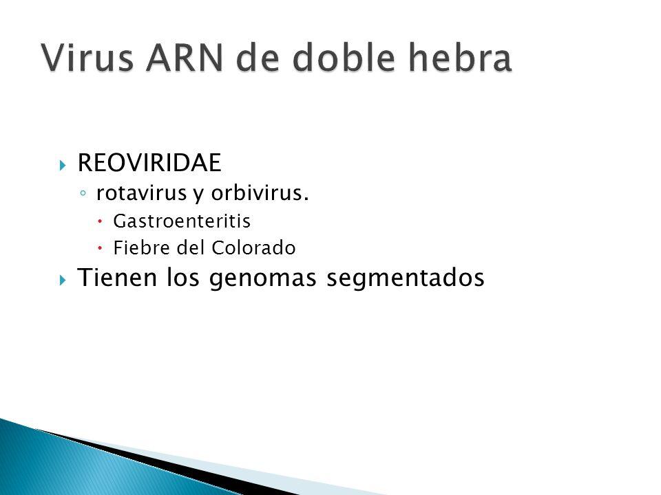 REOVIRIDAE rotavirus y orbivirus. Gastroenteritis Fiebre del Colorado Tienen los genomas segmentados