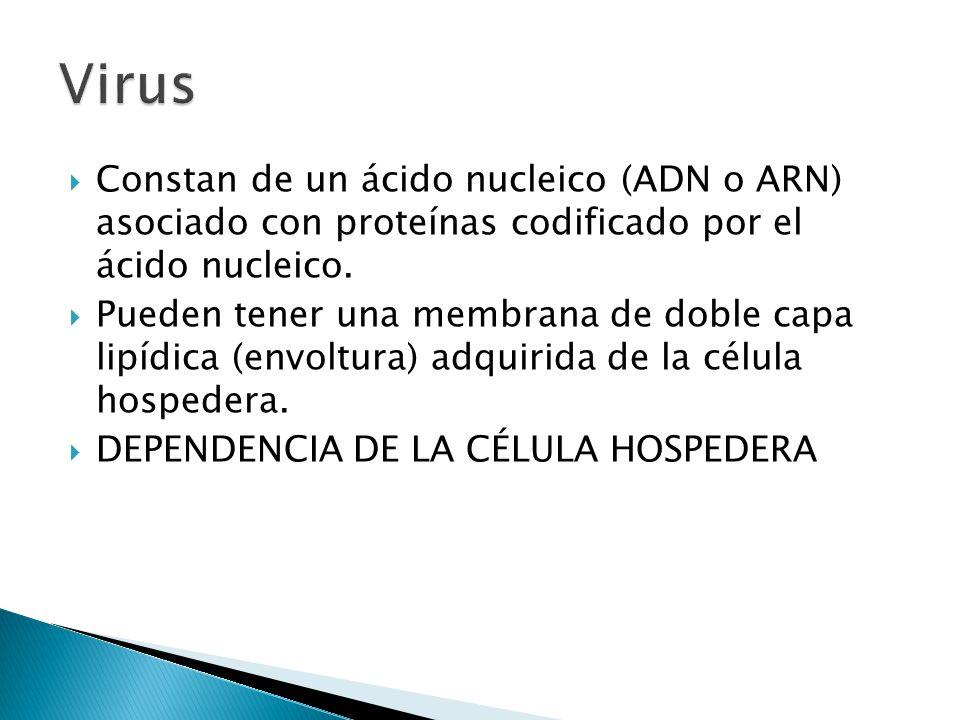Constan de un ácido nucleico (ADN o ARN) asociado con proteínas codificado por el ácido nucleico. Pueden tener una membrana de doble capa lipídica (en