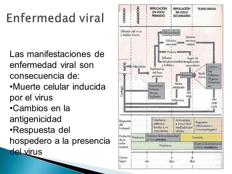 Las manifestaciones de enfermedad viral son consecuencia de: Muerte celular inducida por el virus Cambios en la antigenicidad Respuesta del hospedero