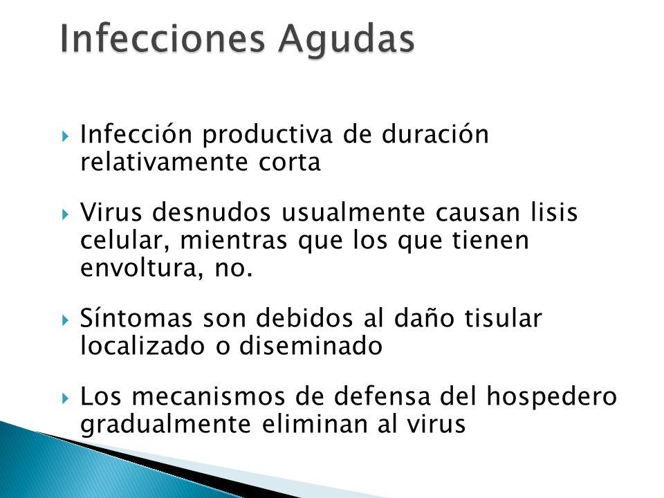 Infección productiva de duración relativamente corta Virus desnudos usualmente causan lisis celular, mientras que los que tienen envoltura, no. Síntom