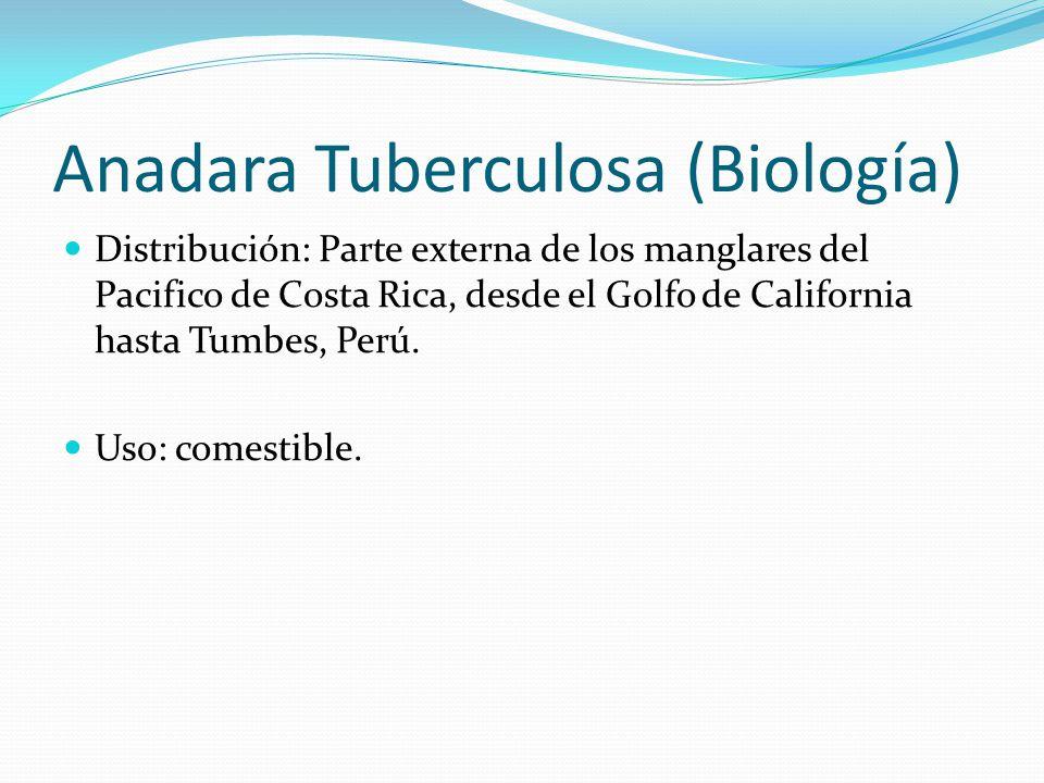 Anadara Tuberculosa (Biología) Distribución: Parte externa de los manglares del Pacifico de Costa Rica, desde el Golfo de California hasta Tumbes, Perú.