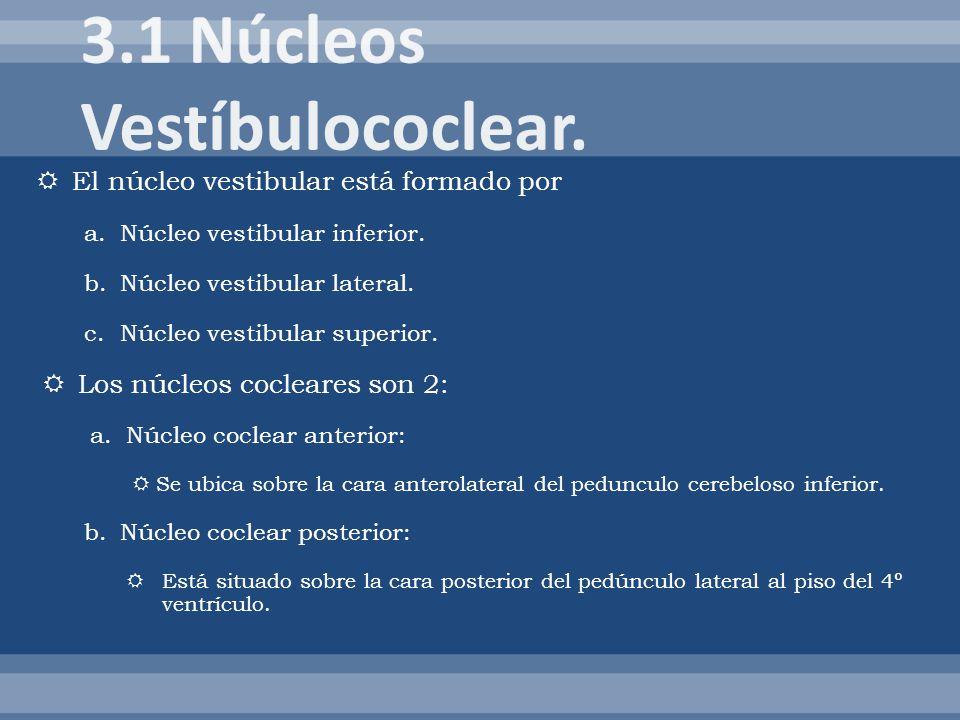 El núcleo vestibular está formado por a.Núcleo vestibular inferior. b.Núcleo vestibular lateral. c.Núcleo vestibular superior. Los núcleos cocleares s