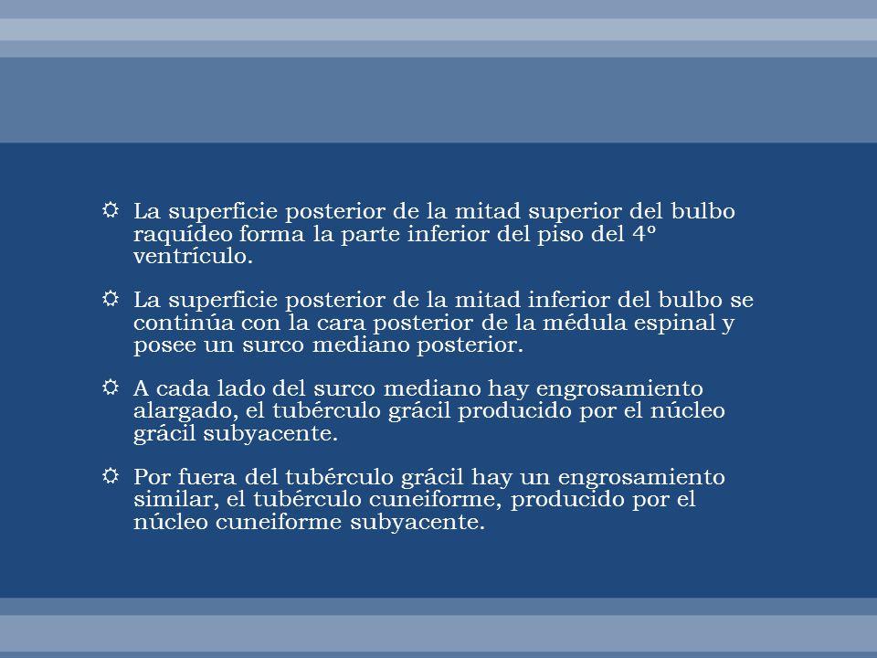 El núcleo vestibular está formado por a.Núcleo vestibular inferior.
