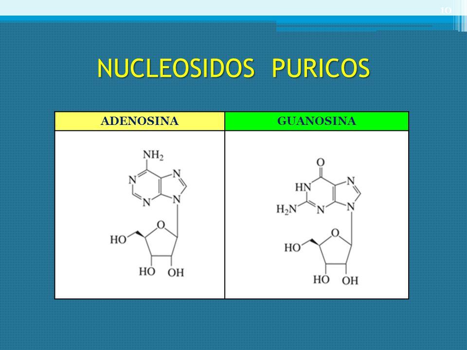 NUCLEOSIDOS PURICOS ADENOSINAGUANOSINA 10