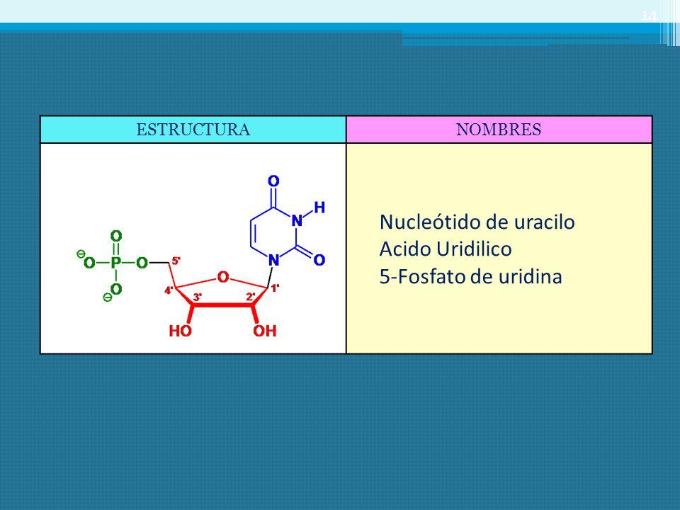 ESTRUCTURANOMBRES Nucleótido de uracilo Acido Uridilico 5-Fosfato de uridina 14