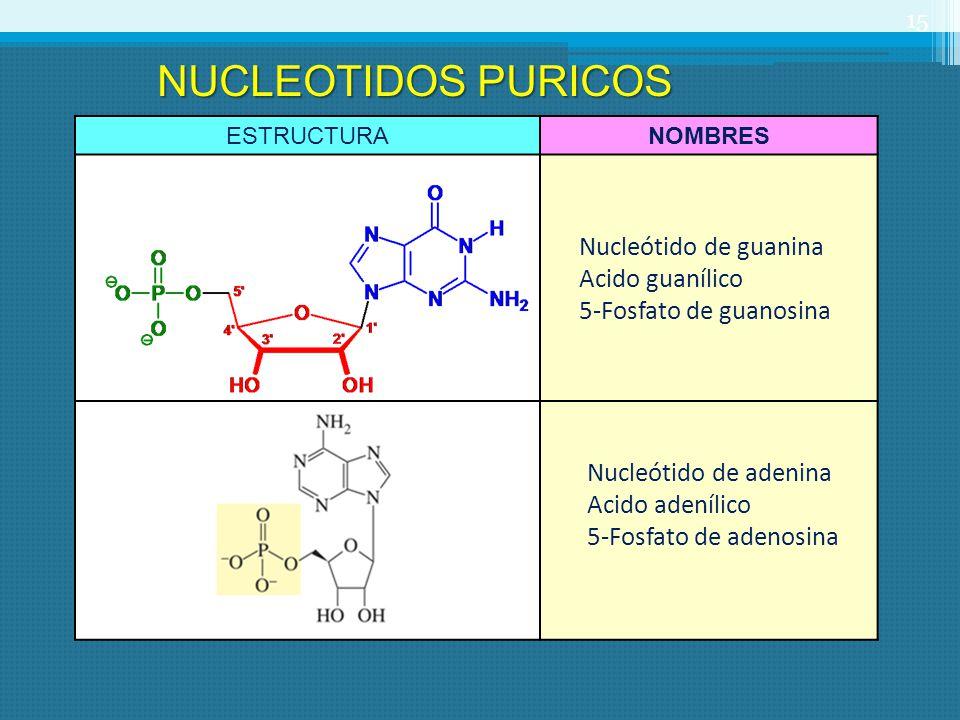 ESTRUCTURANOMBRES Nucleótido de guanina Acido guanílico 5-Fosfato de guanosina Nucleótido de adenina Acido adenílico 5-Fosfato de adenosina 15 NUCLEOT