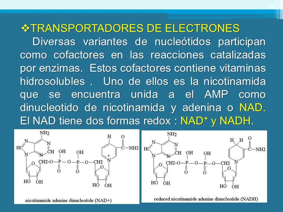 TRANSPORTADORES DE ELECTRONES TRANSPORTADORES DE ELECTRONES Diversas variantes de nucleótidos participan como cofactores en las reacciones catalizadas