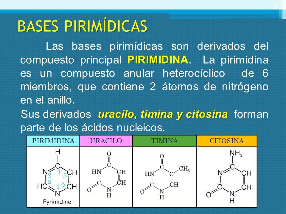 BASES PIRIMÍDICAS PIRIMIDINA Las bases pirimídicas son derivados del compuesto principal PIRIMIDINA. La pirimidina es un compuesto anular heterocíclic