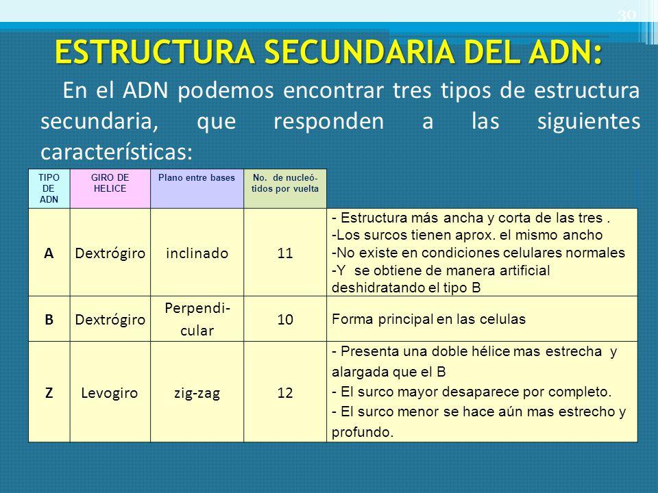 ESTRUCTURA SECUNDARIA DEL ADN: En el ADN podemos encontrar tres tipos de estructura secundaria, que responden a las siguientes características: 30 TIP